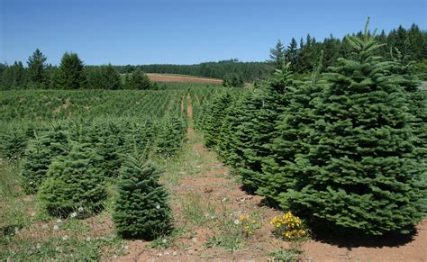 holiday tree farm these are the 10 best places to live in oregon for 2018 homesnacks