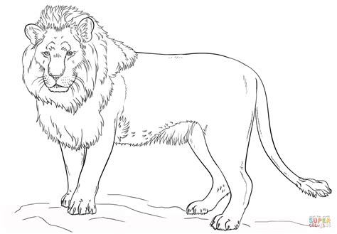 standing lion coloring page  printable coloring pages