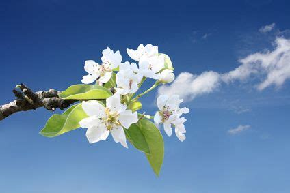 fiori di bach depressione e ansia manda via l ansia con i fiori di bach