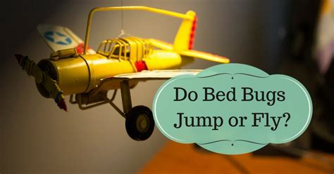 Do Bed Bugs Hop by Do Bed Bugs Jump Or Fly Pest Survival Guide