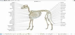 Canine Osteology Illustrations