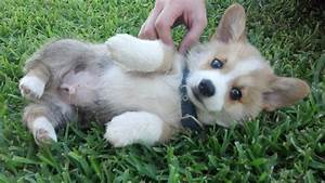 Cute puppy pictures (30 pics) | Amazing Creatures