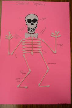 human body skeletal system images human body