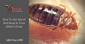 bed bugs archives magic pest control With bugs that get in your bed
