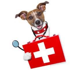 northway animal hospital northway animal emergency clinic 24 7 365 emergency