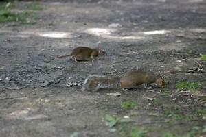 Comment Tuer Un Rat : trou mulot taupier sur la france ~ Mglfilm.com Idées de Décoration
