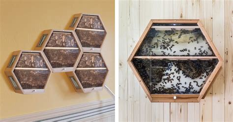 modular bee hives    observe  learn