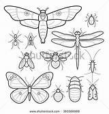 Insects Moth Butterfly Bee Shutterstock Fly Dragonfly Moths Drawing Mosquitoes Vector Silverfish Cockroaches Ants Bedbugs Mites Insect Clip Mono Line sketch template