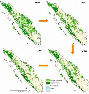 Rainforests decline sharply in Sumatra, but rate of ...