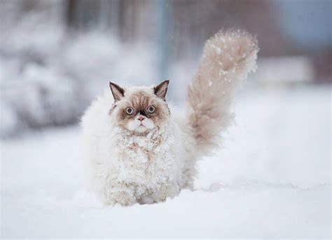 ces animaux qui decouvrent la neige pour la premiere fois
