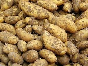Période Pour Planter Les Pommes De Terre : les pommes de terre quelles vari t s planter pour quelle ~ Melissatoandfro.com Idées de Décoration
