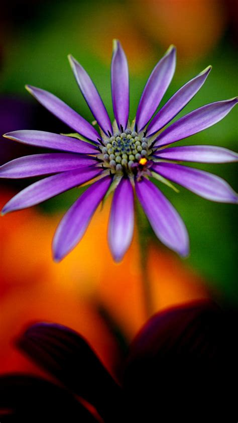 1080p Cool Hd Wallpaper For Mobile by Hd Wallpapers 1080p For Mobile With Purple Flower