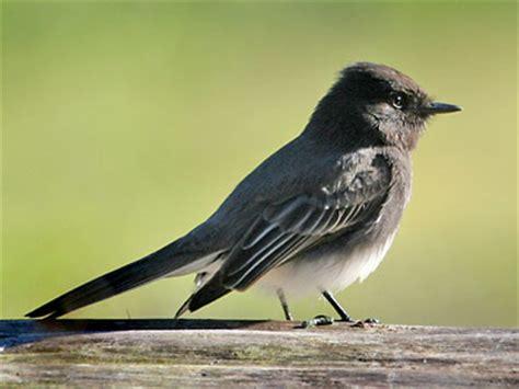 top 10 cutest california birds audubon california