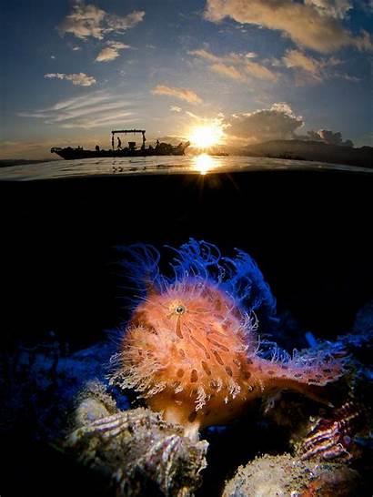 Underwater Photographer Ocean Photographs Sunrise Winner Hairy