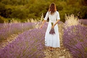 Lavendel Sorten übersicht : h he vom lavendel wie hoch wird welche sorte ~ Eleganceandgraceweddings.com Haus und Dekorationen