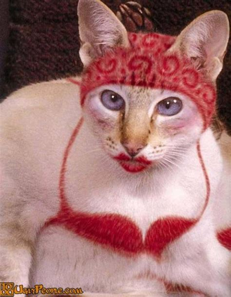 Ugly Cats 42 People Weird Funny Hot Cute Cat Wallpaper