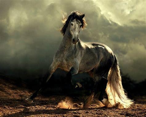 fotos pferden mehr als 70 sch 246 ne pferde bilder archzine net