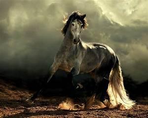 Schöne 3d Bilder : mehr als 70 super sch ne pferde bilder ~ Eleganceandgraceweddings.com Haus und Dekorationen
