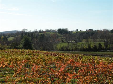 northern virginia wineries hillsboro prices  horses