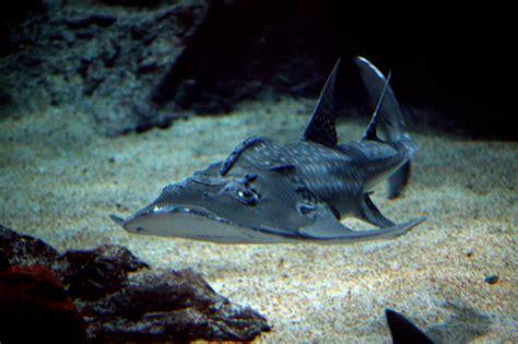 p tite visite d un aquarium montpellierain