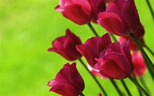 Image result for images of flowers