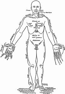 Front View Of The Parts Of The Human Body Labeled In English And Latin