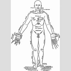 Front View Of The Parts Of The Human Body Labeled In English And Latin  Clipart Etc