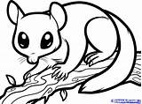 Glider Sugar Coloring Draw Nocturnal Possum Animals Pages Gliders Animal Step Clipart Dragoart Colouring Drawing Sheets Printable Drawings Aboriginal Opossum sketch template