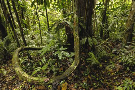 Amazon Rainforest Wallpapers  Wallpaper Cave. Eclectic Style Living Room. Living Room Set For Sale. Dark Sofa Living Room Designs. Little Living Room Ideas. Interior Design Living Room Photos. Living Room Storage Cabinets With Doors. Side Table Ideas For Living Room. Behr Living Room Colors