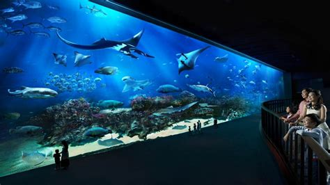 aquarium sea singapore underwater aquarium check out singapore underwater aquarium cntravel