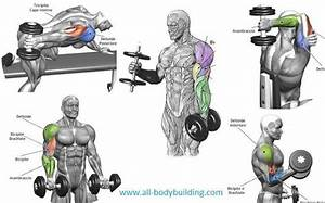 Diet Chart For Lean Muscle Gain Dumbbell Exercises For Arms Dumbbell Workout Dumbell