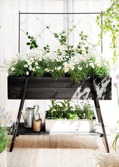 ideas  indoor window boxes  pinterest