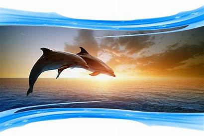 Dolphins Jumping Week
