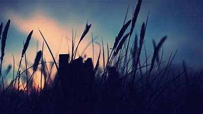 Silhouette Nature Night Landscape Scenery Macro Wallpapers