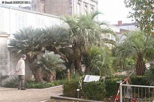 Jardin Des Plantes La Rochelle : le forum des fous de palmiers jardin des plantes du mus um de la rochelle ~ Melissatoandfro.com Idées de Décoration