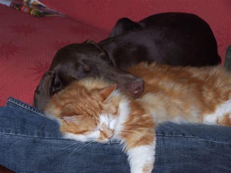 cohabitation entre chien et chat educateur canin et comportementaliste chien 75 77 78 91