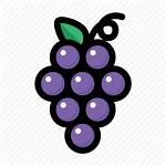 Grape Grapes Icon Fruit Wine Icons 512px