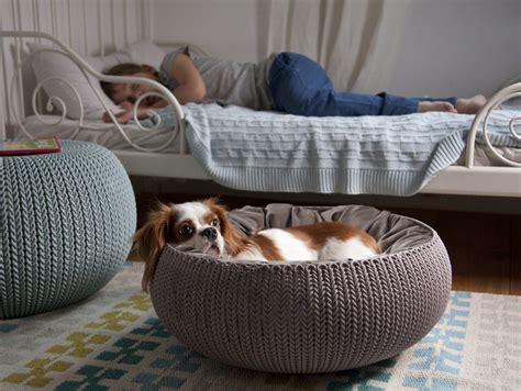 Home Design With Pets In Mind by Pets