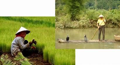 Environment Adapted China