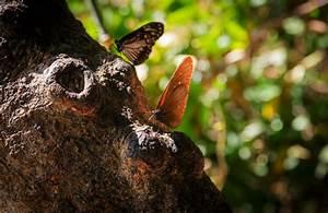 Schmetterlinge überwintern Helfen : so machst du deinen garten zum winterquartier f r wilde tiere w stenrot mein leben ~ Frokenaadalensverden.com Haus und Dekorationen
