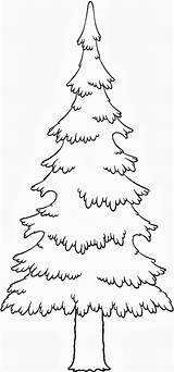 Pine Coloring Tree Trees Pages Evergreen Drawing Colouring Drawings Leaves Adult Pencil Printable Adults Dibujo Template Google Silhouette Getdrawings Getcolorings sketch template