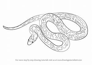 Learn How To Draw A Spotted Python Snakes Step By Step