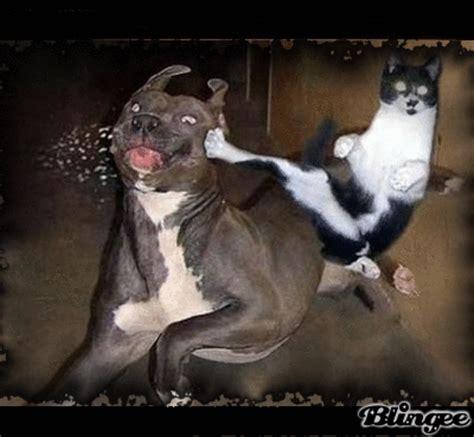 kick katze gegen hund bild  blingeecom