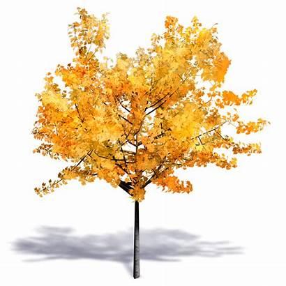 Tree Autumn Generic Plants 3d Autocad Cad