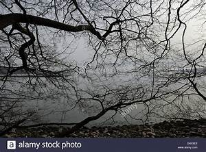 Bäume Im Winter : blattlose b ume im winter stockfoto bild 62658465 alamy ~ Eleganceandgraceweddings.com Haus und Dekorationen