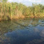 Everglades Boat Tours Homestead Fl by Airboat In Everglades Airboat In Everglades Explore The