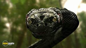 Rent Anaconda 3: Offspring (2008) film   CinemaParadiso.co.uk