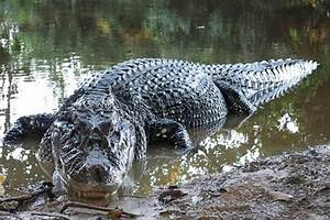 The Wildlife Of The Amazon River | Fred. River Cruises