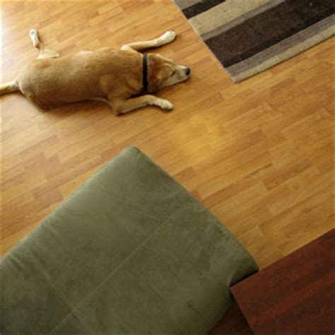 Best Pet Friendly Flooring Options   Carolina Flooring