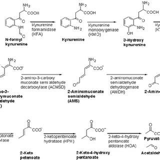 tryptophan catabolism identification